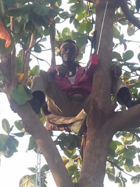 Man-Climbs-Tree-for-Buhari-450x600