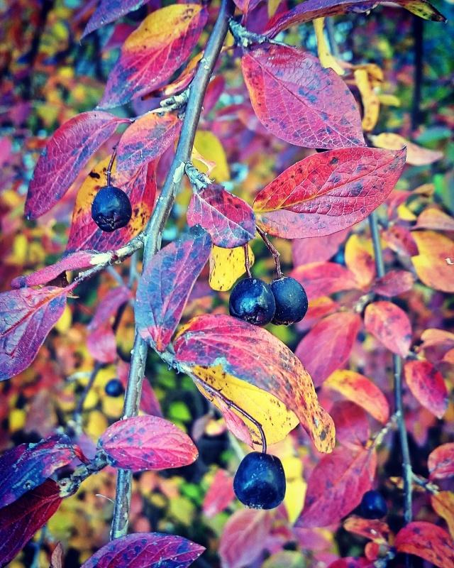 Helsinki_autumn_06