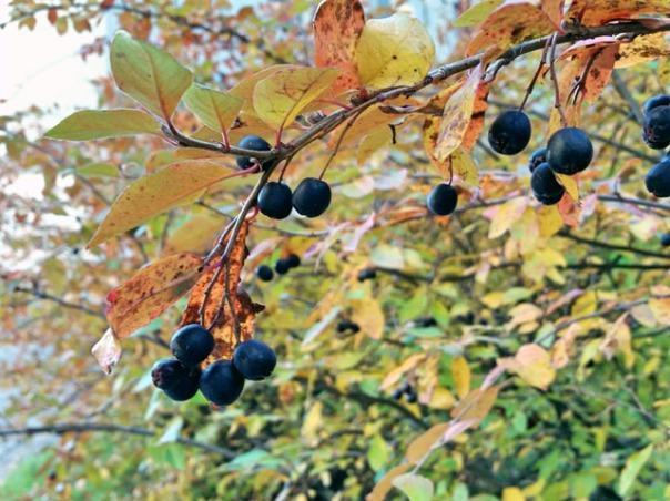 Helsinki_autumn_07